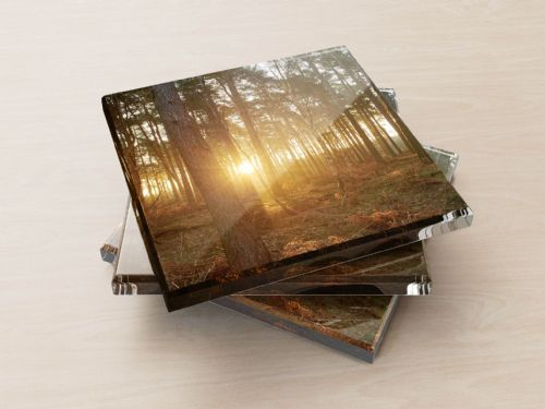 Dawn, Pine Woods - Glass Coasters